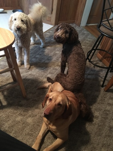 Butchie, Juno, and Jupitor